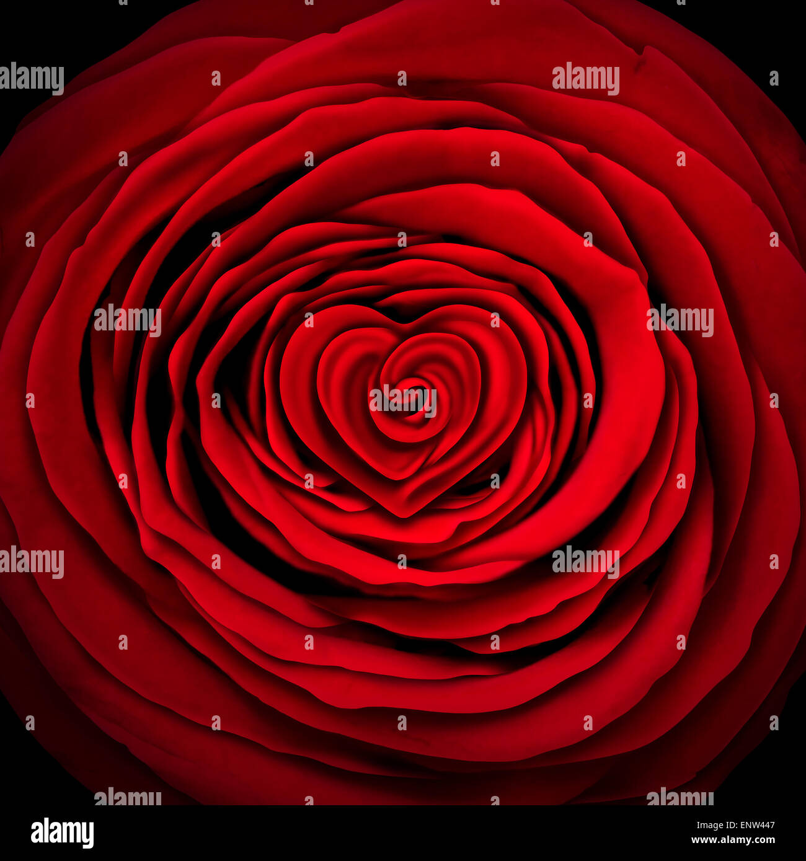 L'amour rose concept comme un élément de design fleur rouge en forme de cercle avec une forme de cœur Photo Stock