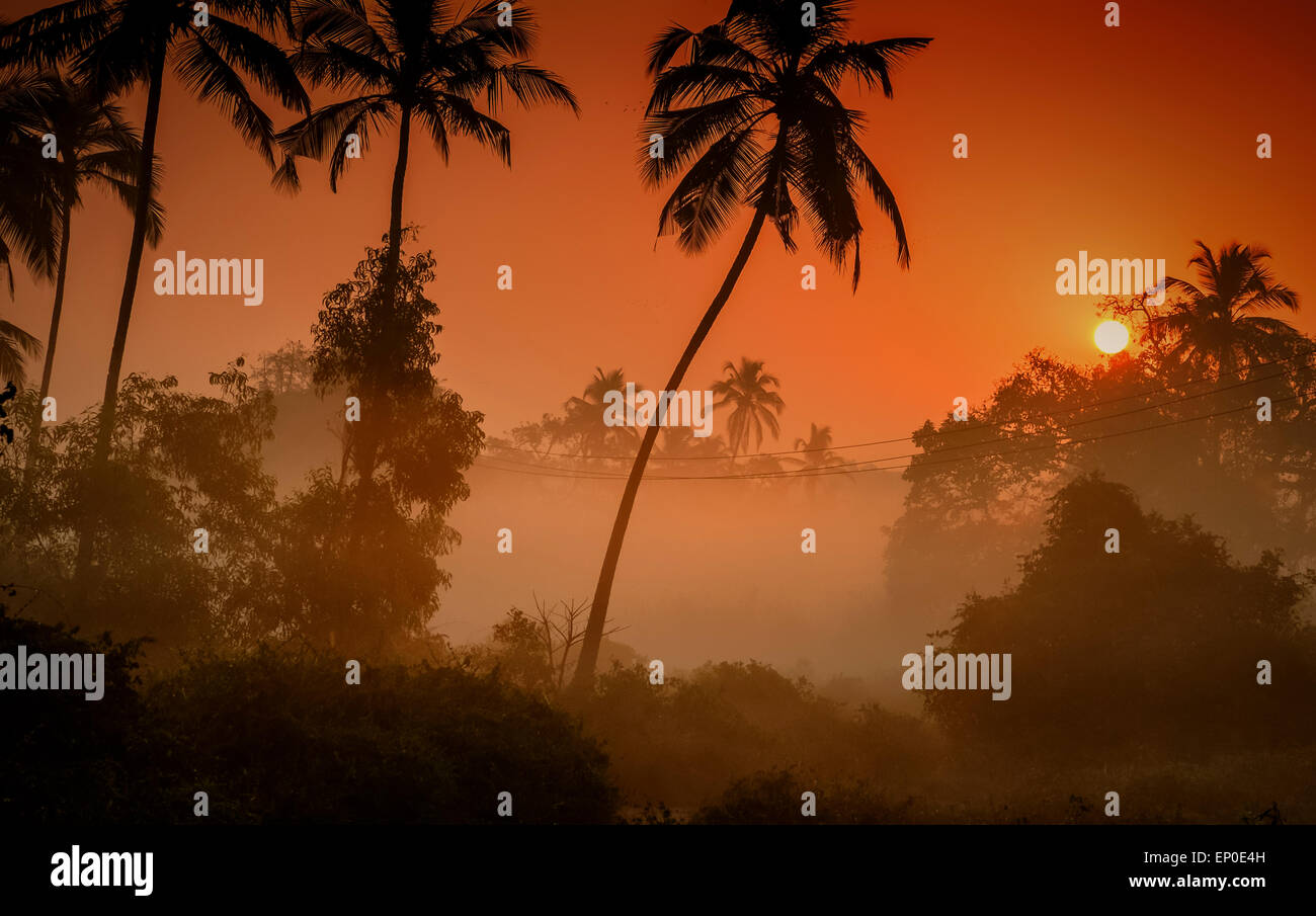 Palmiers silhouetté contre un brouillard lever du soleil dans le village de Tamborim, Goa, Inde Photo Stock