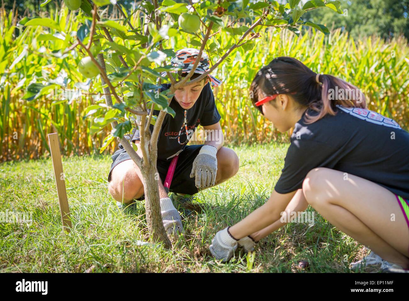 Deux jeunes adultes la plantation d'un arbre. Photo Stock