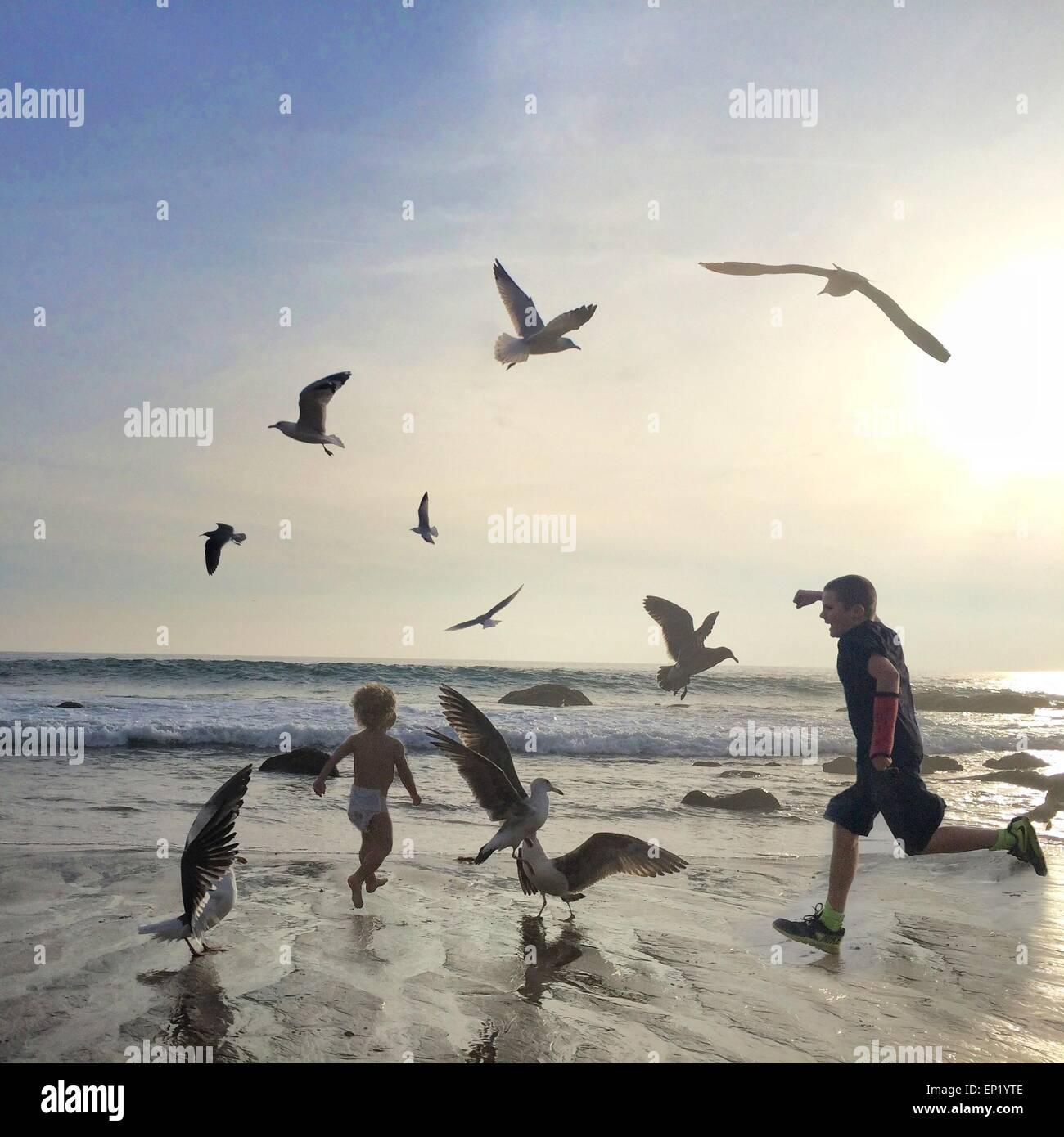 Deux garçons s'exécutant sur plage parmi les mouettes Photo Stock
