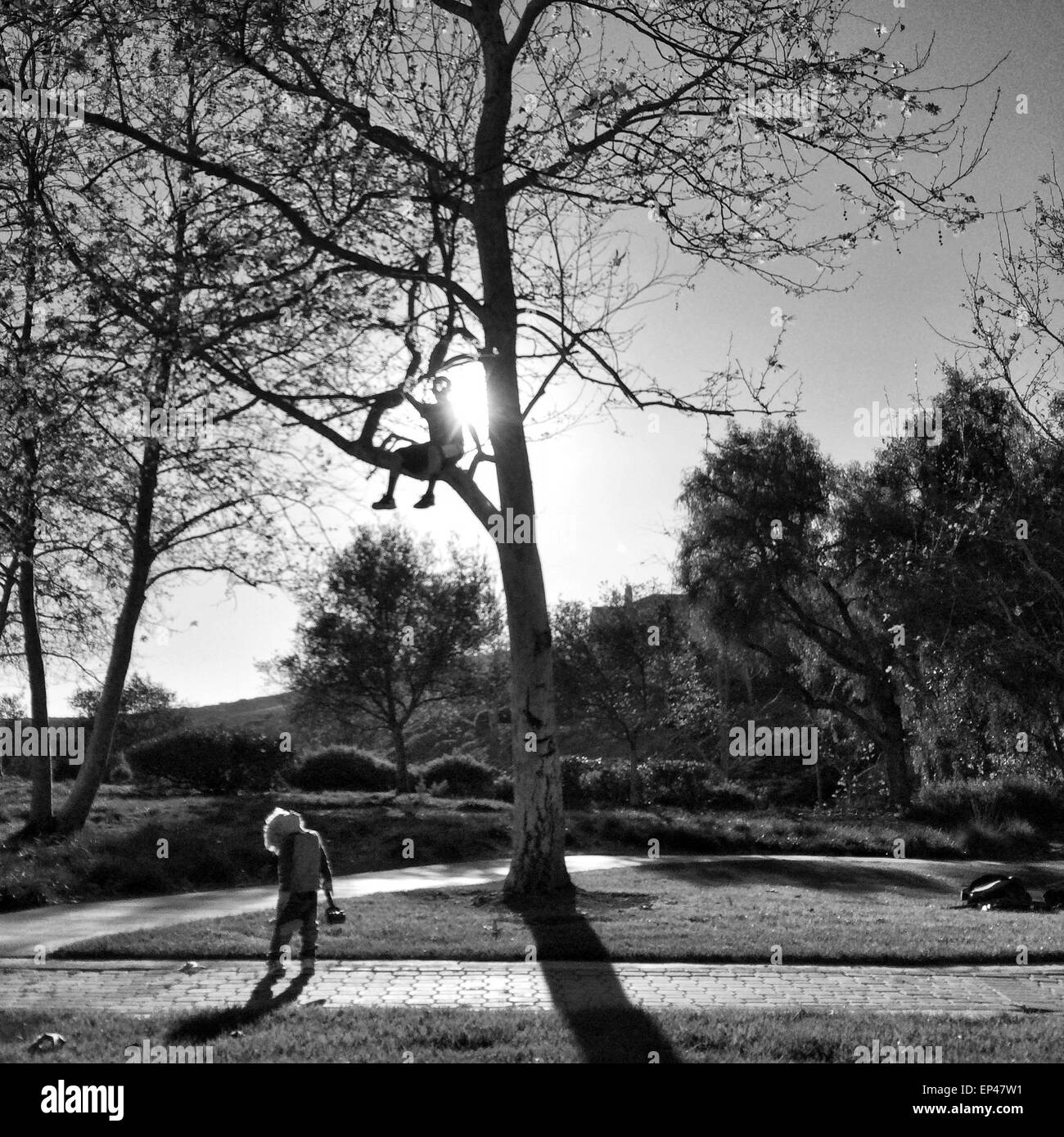 Garçon assis dans un arbre en regardant son ami Photo Stock