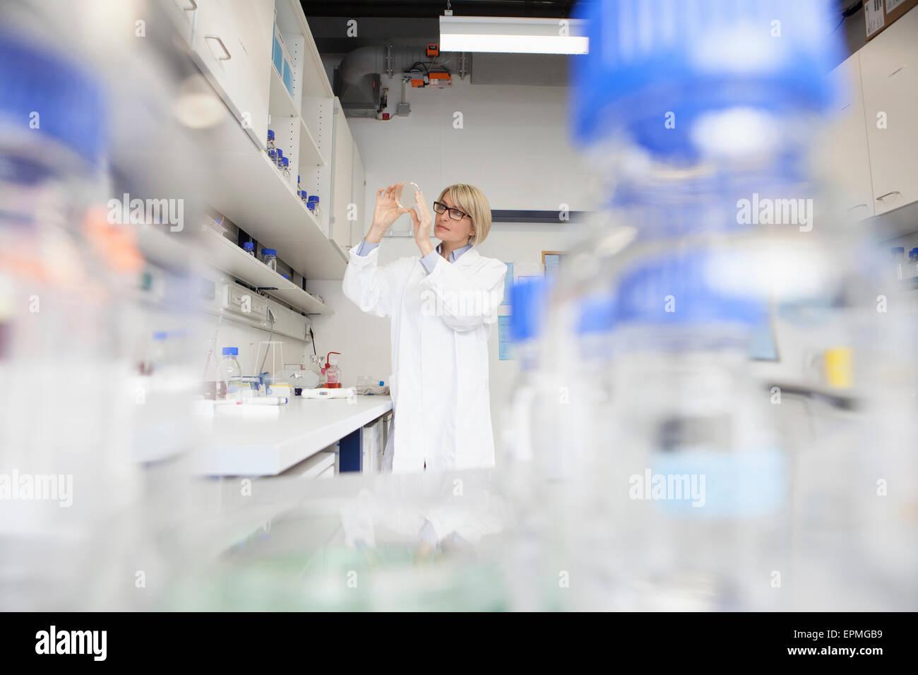 Chercheur scientifique au laboratoire de petri Photo Stock