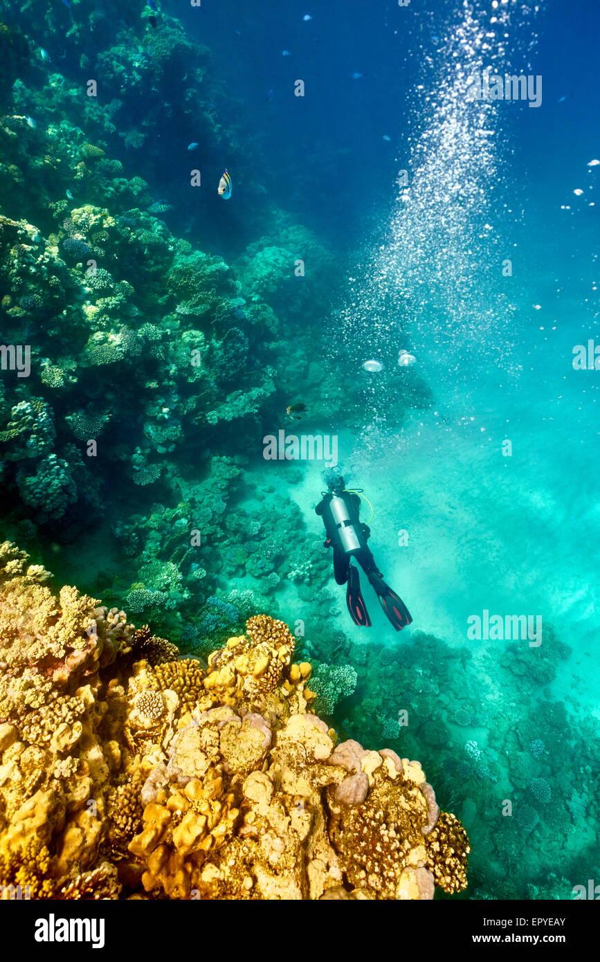 Récif de Marsa Alam, seul sous-marin Plongeur, Red Sea, Egypt Photo Stock