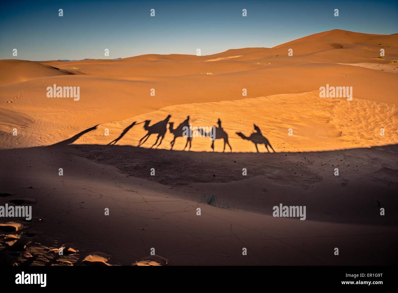De longues ombres de caravanes de chameaux marcher dans le désert du Sahara, dans le sud du Maroc Photo Stock