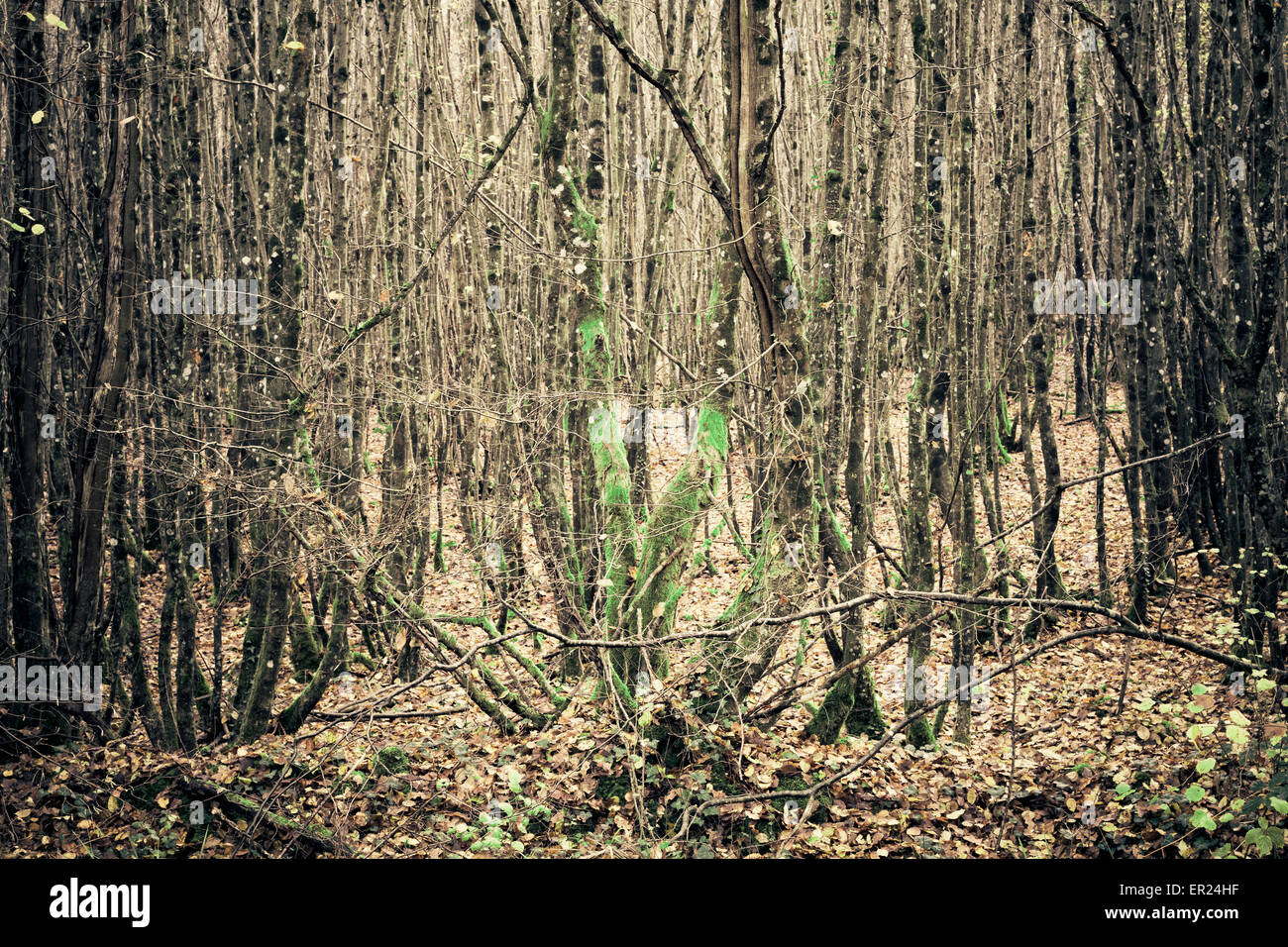 Arbre arbres forêt bois Photo Stock