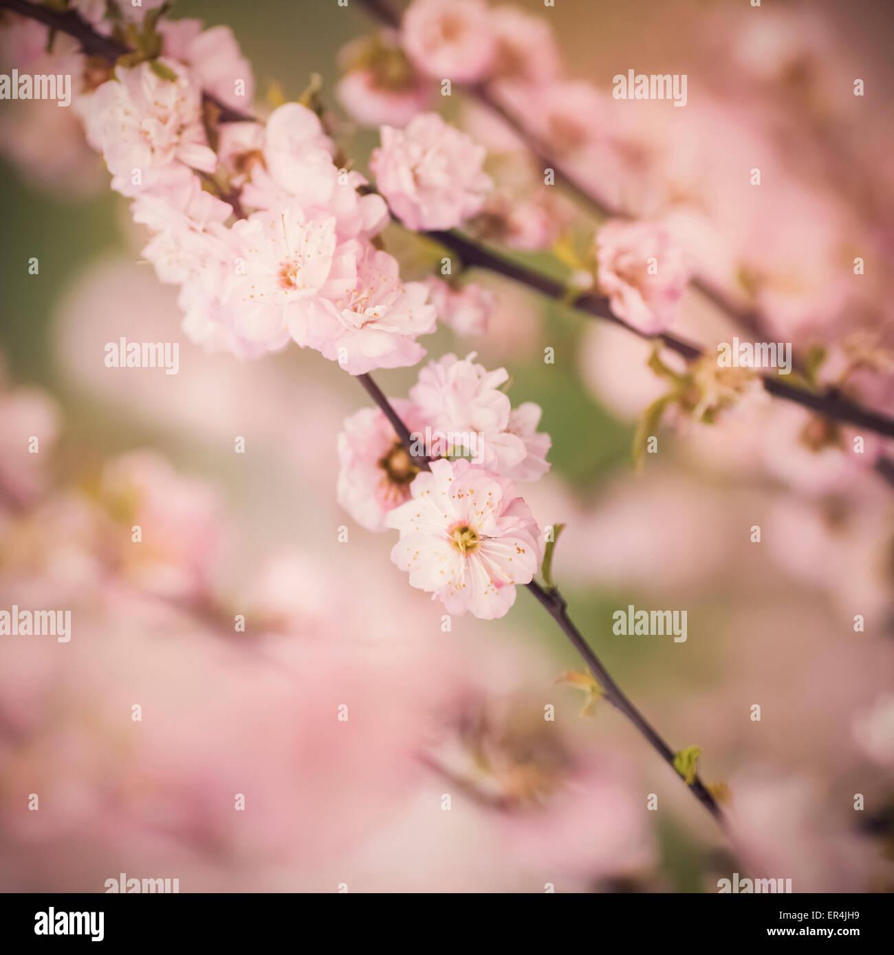 De belles fleurs avec accent peu profondes Photo Stock