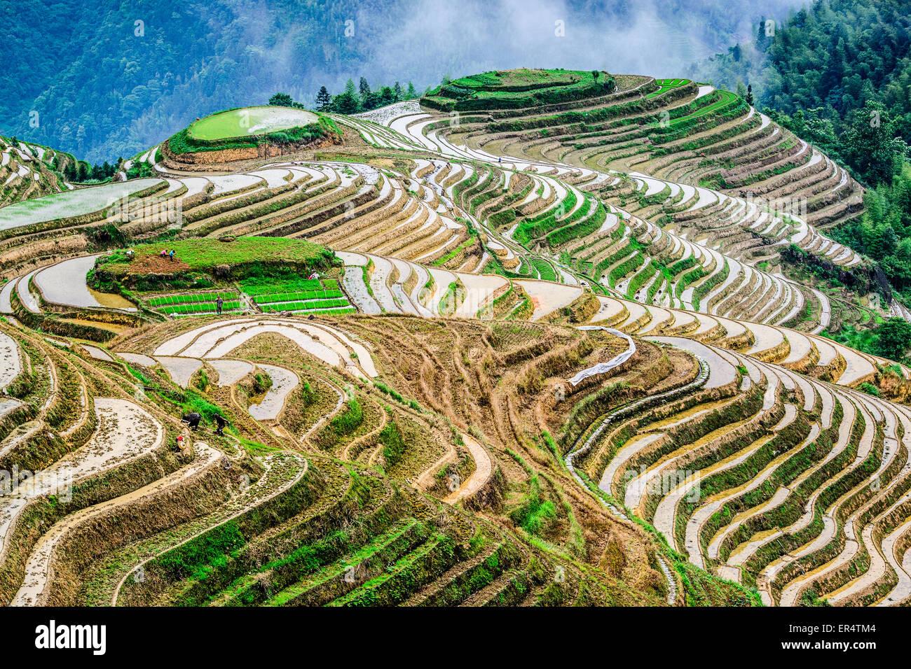 Yaoshan Mountain, Guilin, Chine rizières en terrasses à flanc de paysage. Photo Stock