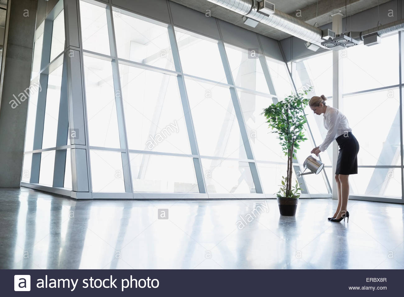 Businesswoman watering potted tree in modern office Photo Stock