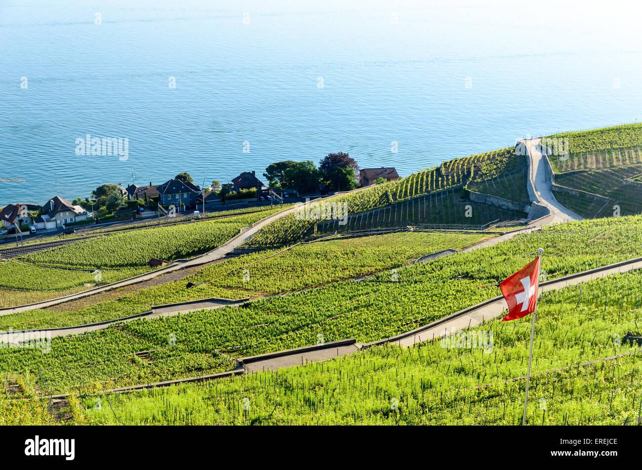 Drapeau suisse volant dans les vignobles de Lavaux en Suisse, par le lac de Genève Banque D'Images