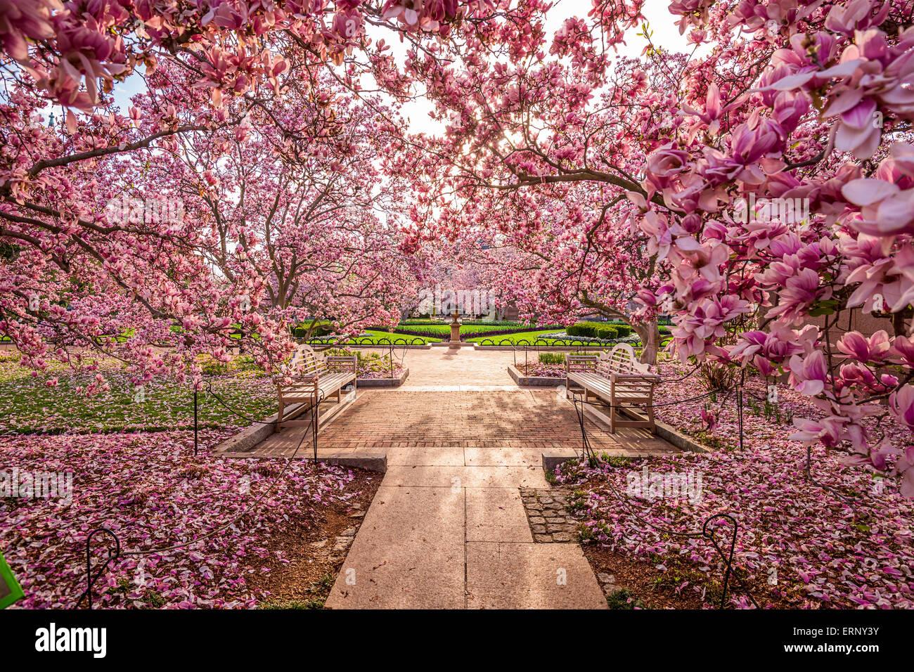 Washington DC, USA jardin de printemps près de la National Mall durant la saison de printemps. Photo Stock
