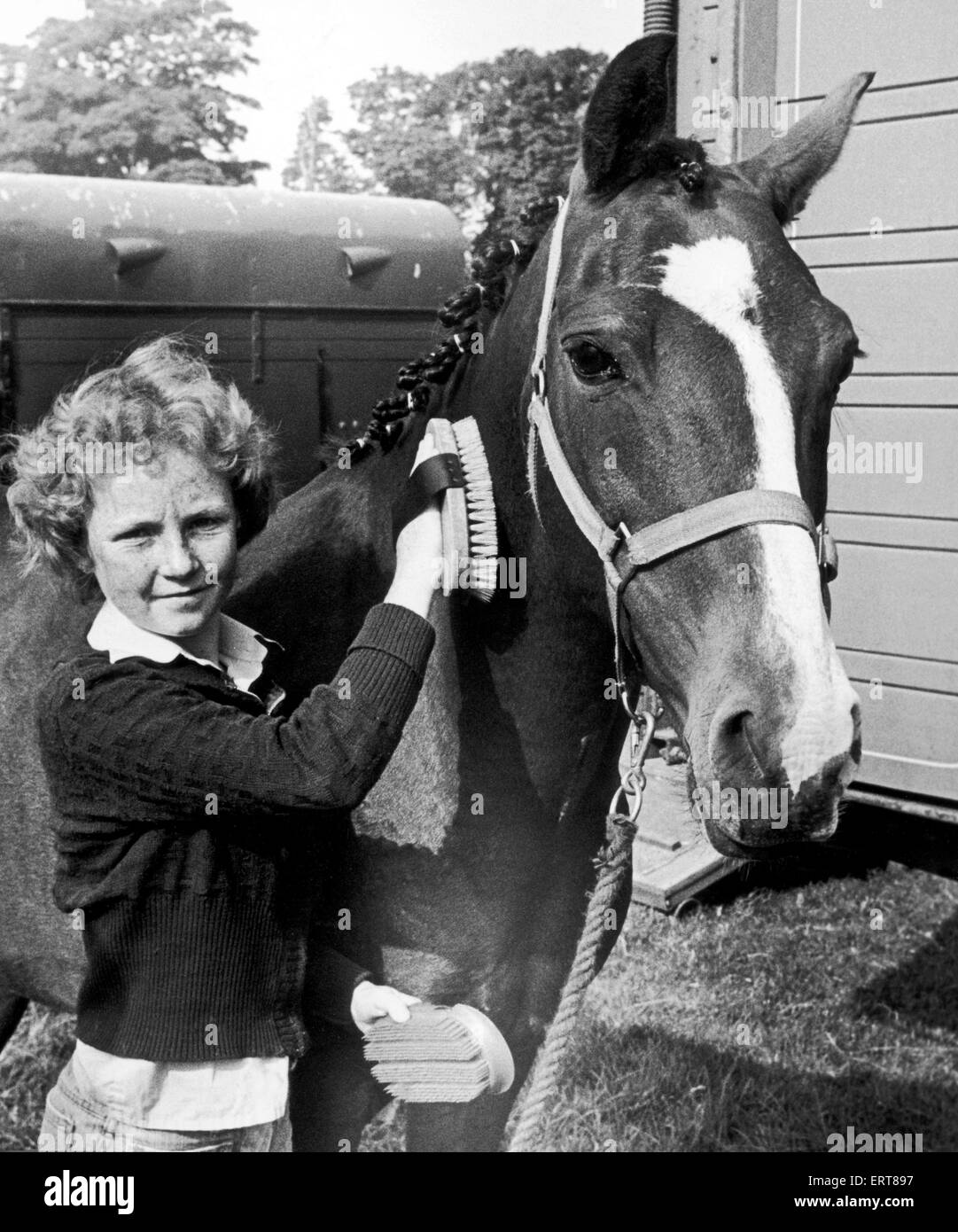 14 ans Julie Simpson brosser un cheval à Hutton Rudby salon de l'agriculture. 28 août 1978. Photo Stock