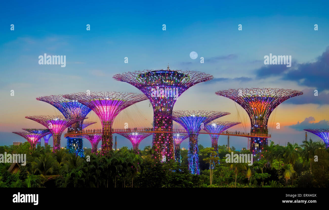 Singapour-JUN 1 : Vue de la soirée à Supertree Grove Gardens by the Bay le Juin 1, 2015 à Singapour. Photo Stock