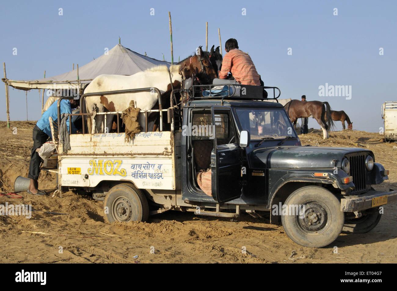 Transport de chevaux à Pushkar au Rajasthan Inde équitable Photo Stock