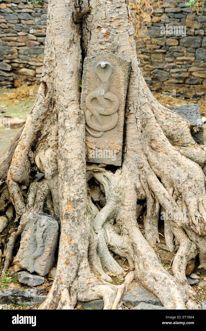 Snake en pierre à root à Velapur;;; Inde Maharashtra Mumbai Banque D'Images