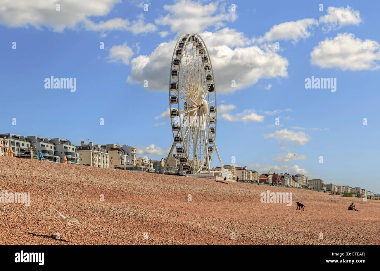 Vue sur la roue de Brighton (grande roue) sur une journée ensoleillée au printemps, le front de mer de Brighton, East Sussex, Angleterre, Royaume-Uni. Banque D'Images