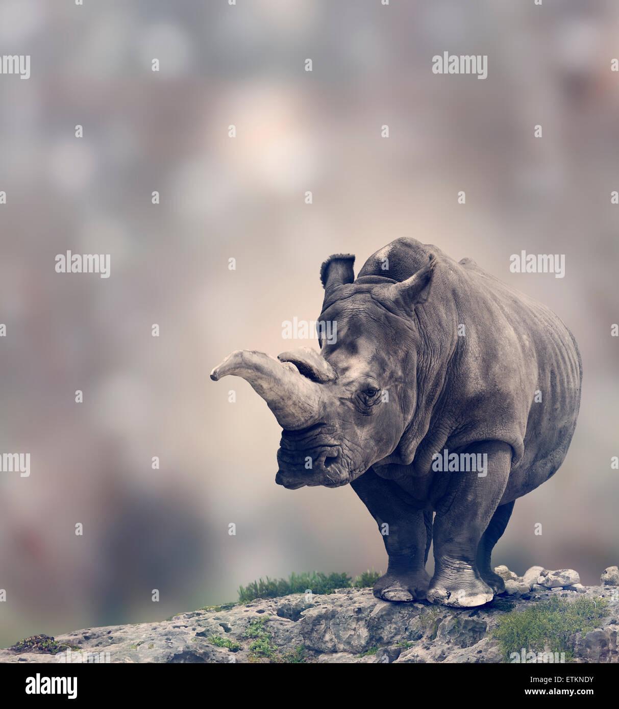 Portrait de rhinocéros blanc d'Adultes Photo Stock