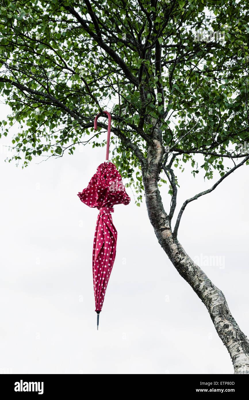 Un parapluie rouge à pois blancs est suspendu à un arbre Photo Stock