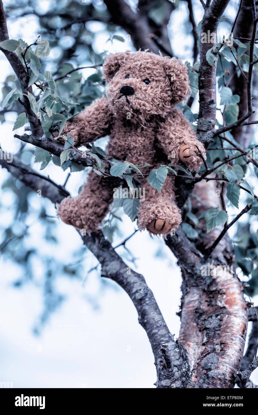 Un ours est accroché dans un arbre Photo Stock