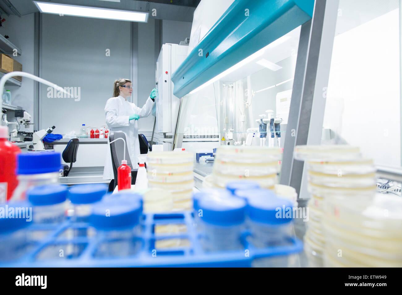 Young female scientist travaillant au laboratoire des échantillons biologiques de l'inspection Photo Stock