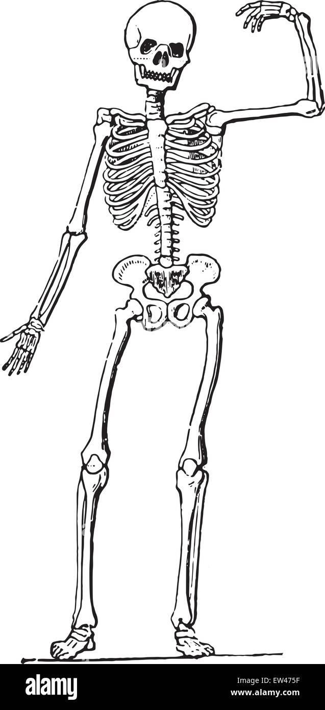 Großartig Siebente Nerv Anatomie Galerie - Anatomie Ideen - finotti.info