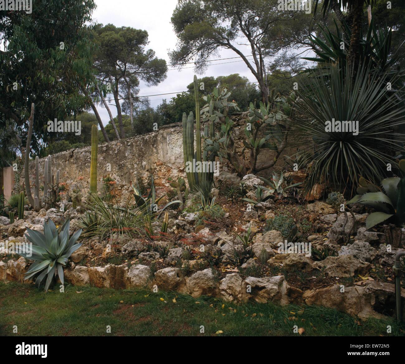 Cactus et plantes qui aiment la sécheresse de plus en rocaille dans ...