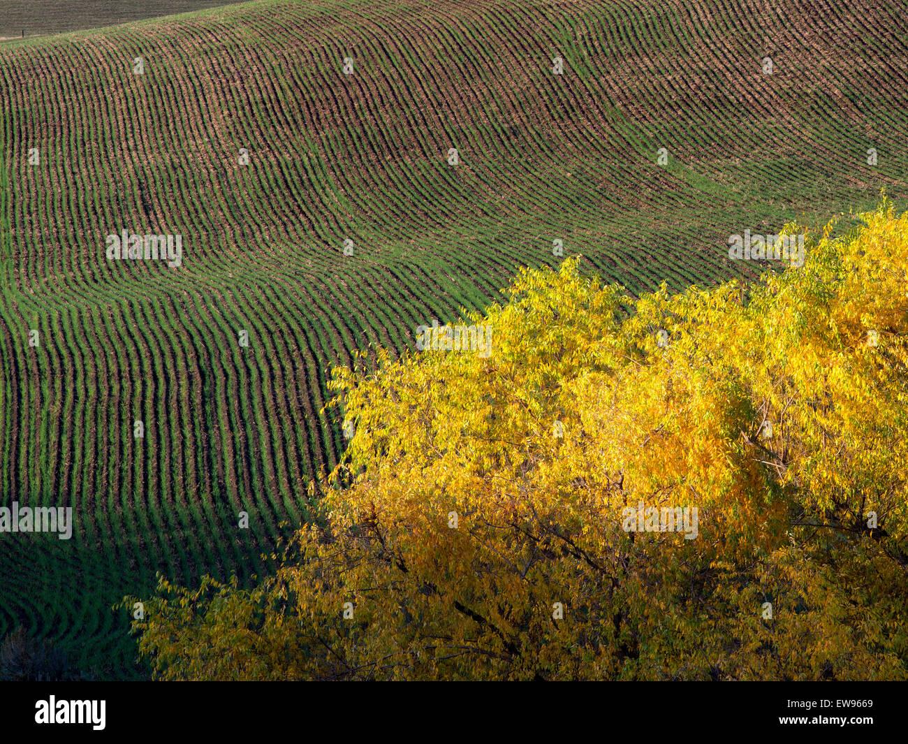 Couleur automne willow tree. Près de la gorge du Columbia, New York Photo Stock