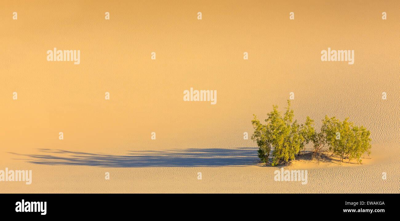 Lever du soleil dans les dunes de sable plat Mesquite dans Death Valley National Park en Californie, USA Banque D'Images
