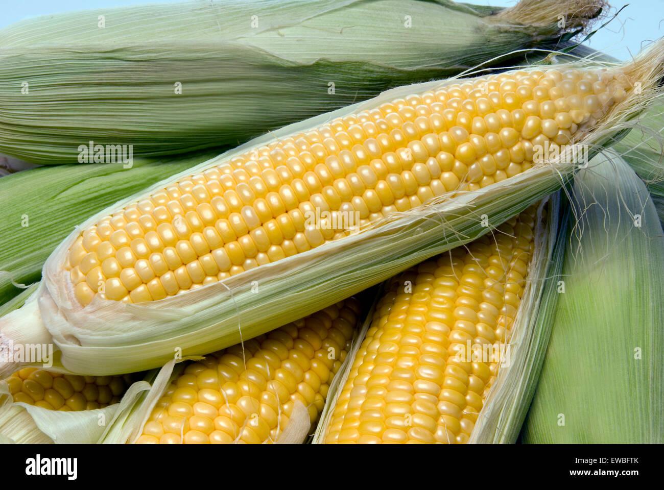 Close up of beau jaune des épis de maïs d'été a l'extérieur de la ferme. Photo Stock