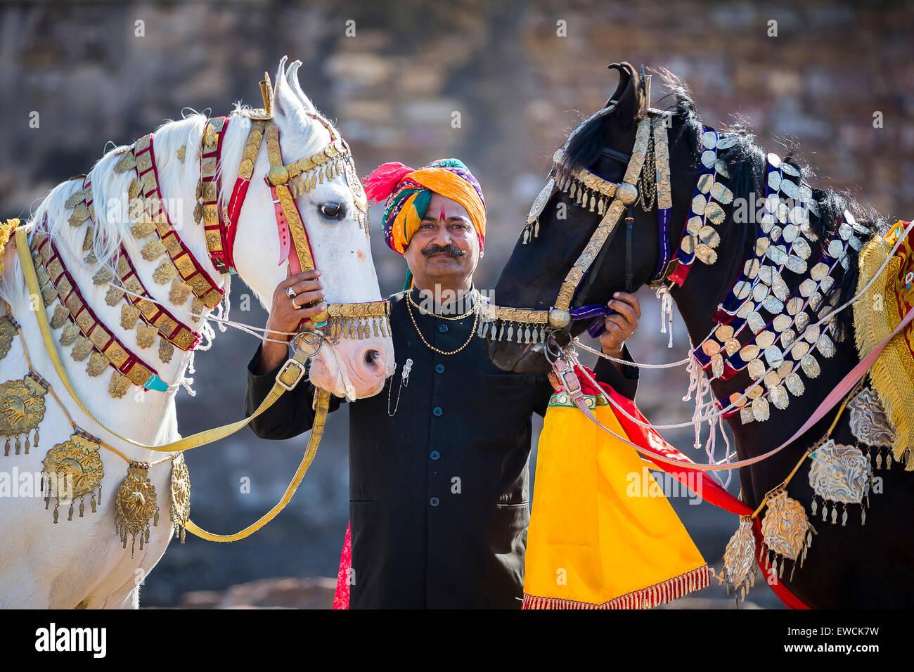 Chevaux Marwari. Paire de chevaux décorés avec fier propriétaire. Le Rajasthan, Inde Photo Stock