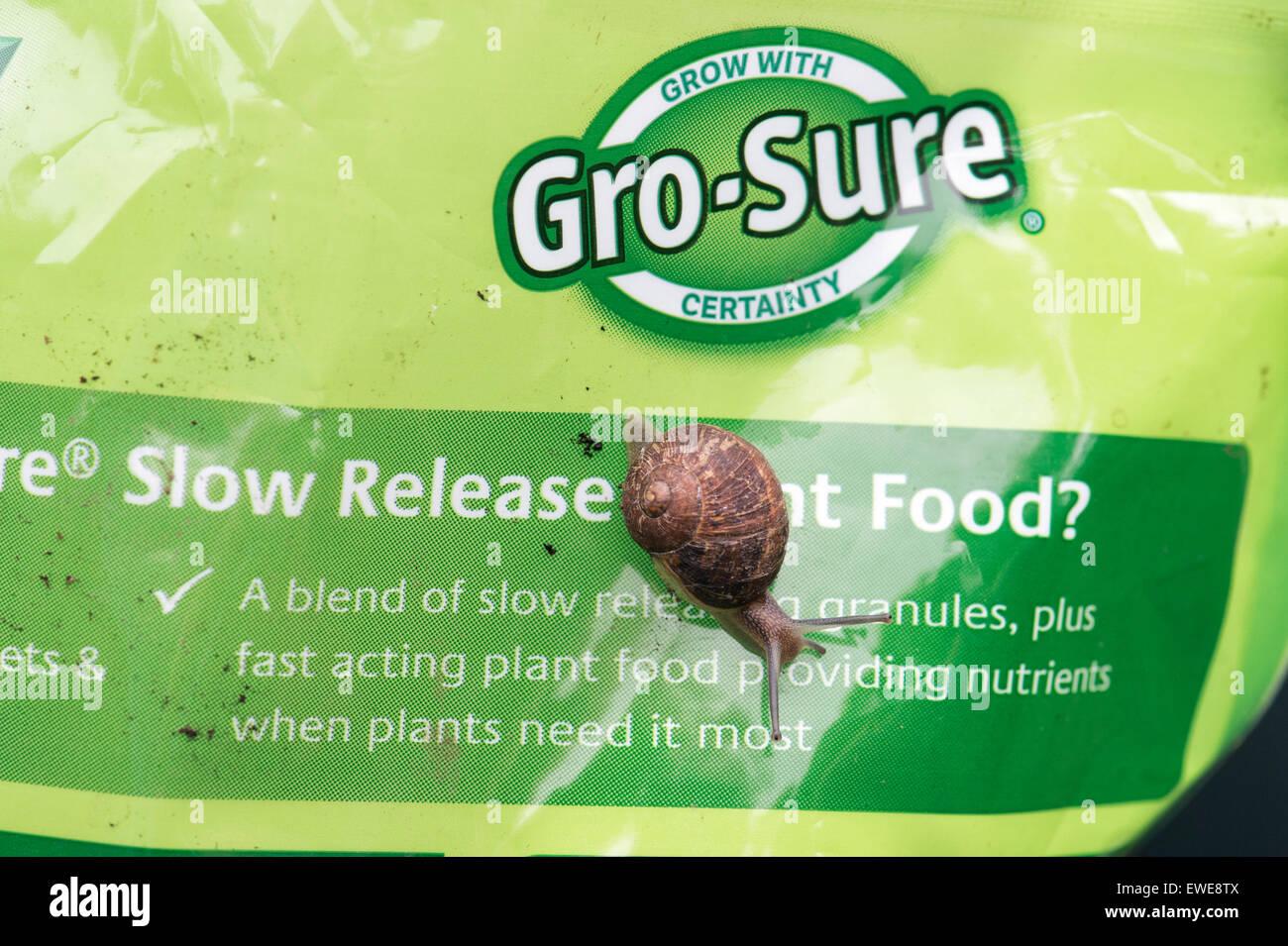 Escargot sur un gro-sûr nourriture végétale en paquet Photo Stock