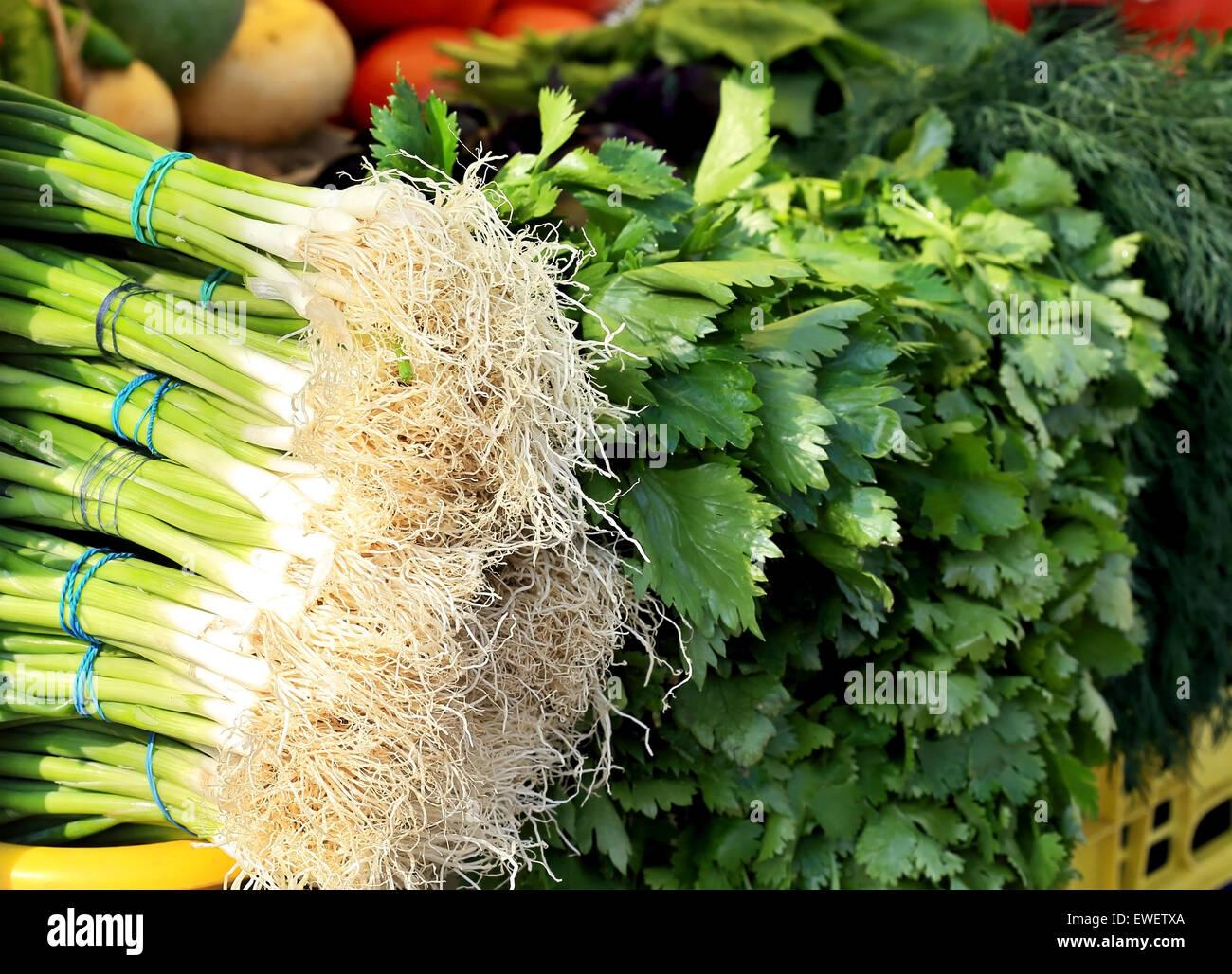 L'oignon vert, le persil, l'aneth sur le comptoir de vente Photo Stock