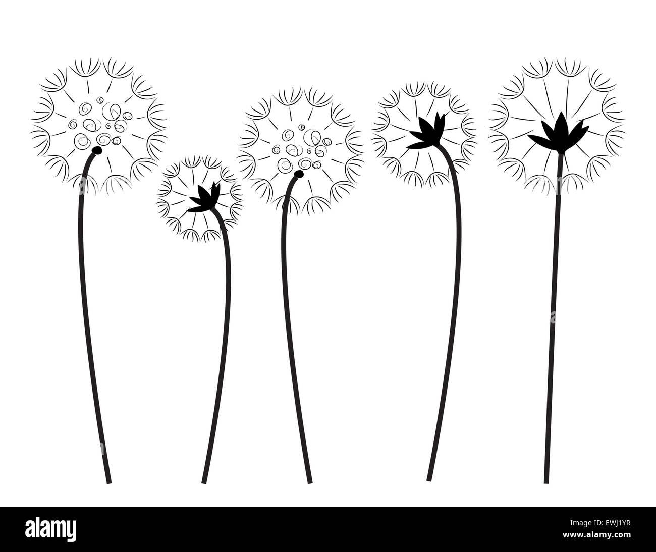 Art numérique cinq pissenlits en noir et blanc pour décorer et donner le bonheur et l'amour. Banque D'Images