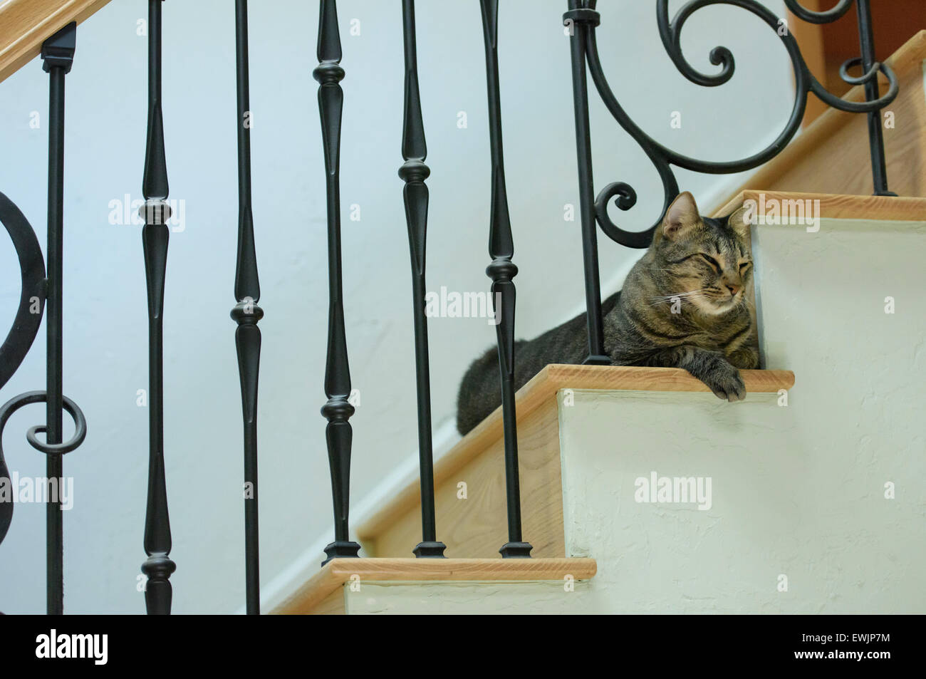 Branche Mâle Tabby chat gris Photo Stock