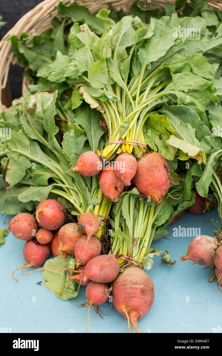 Produits frais, issus de l'golden beets at Sebastopol Farmer's Market, dans le Comté de Sonoma, en Photo Stock