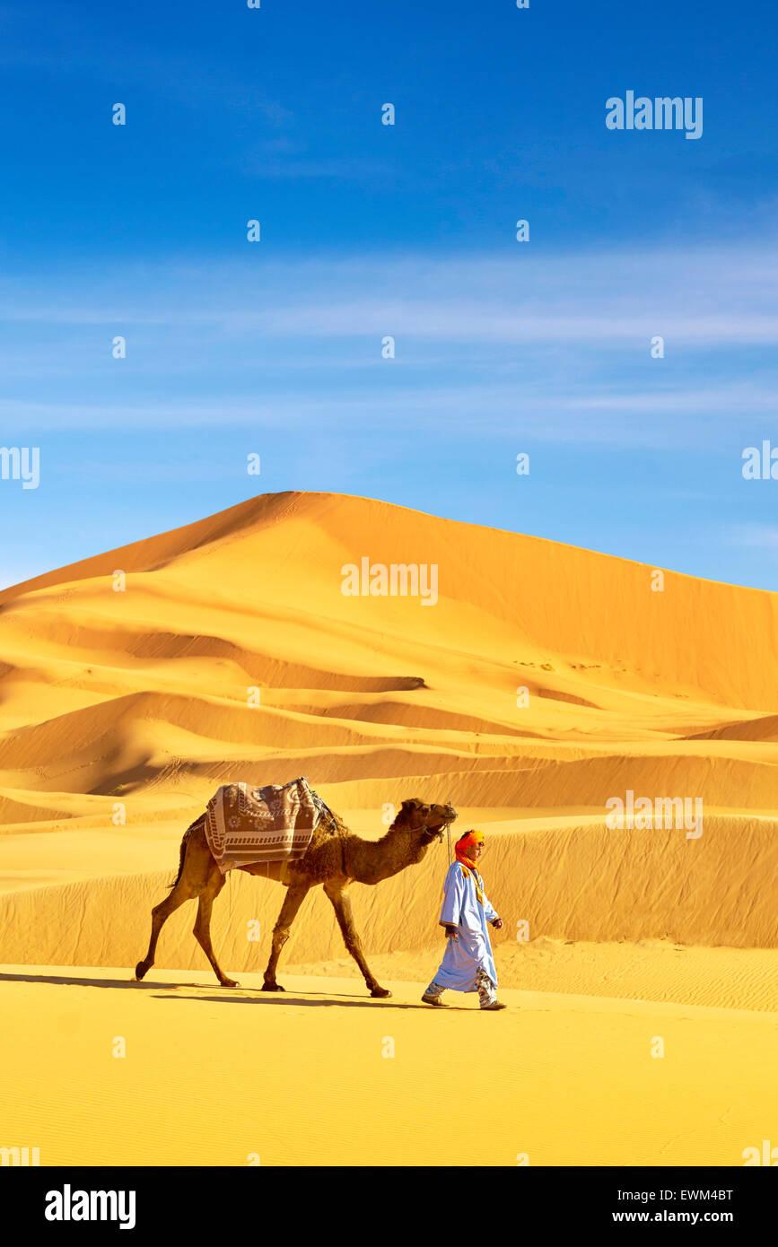 Homme berbère avec son chameau, le désert l'Erg Chebbi près de Merzouga, les dunes du Sahara, Photo Stock