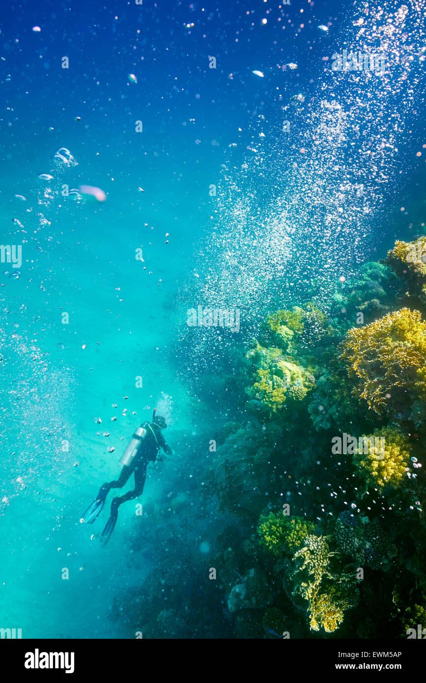 Seul scuba diver, Récif de Marsa Alam, Red Sea, Egypt Photo Stock