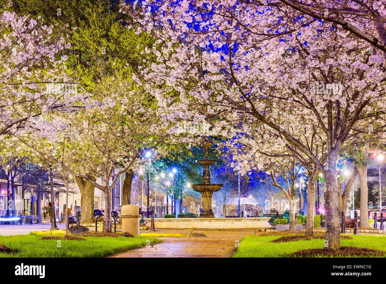 Macon, Géorgie, USA Centre-ville avec la floraison des cerisiers. Photo Stock