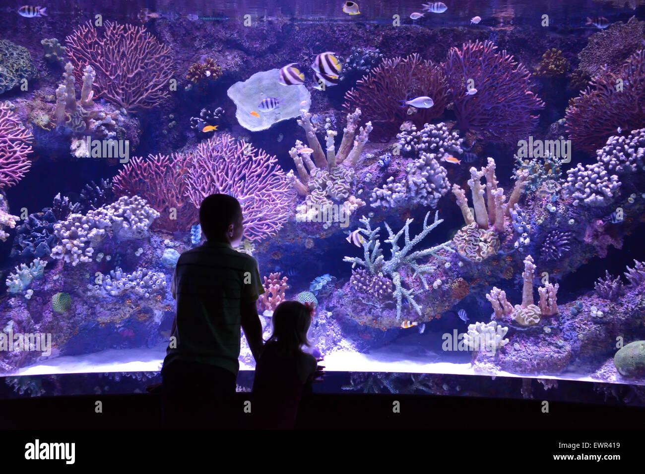 Les gens regardent un grand aquarium Photo Stock