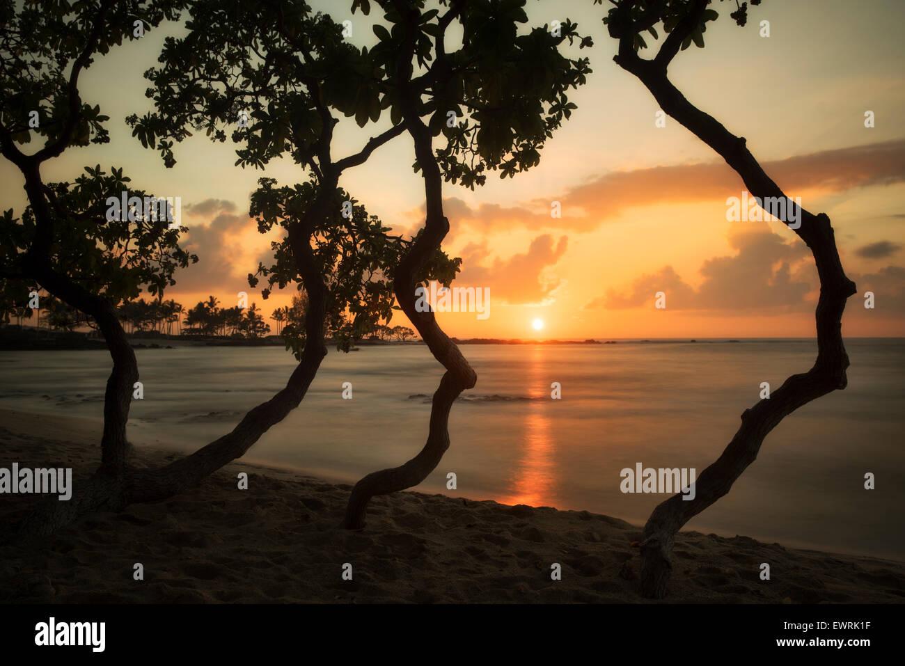 Coucher du soleil à travers les arbres sur la côte Kohala. New York, la grande île. Photo Stock