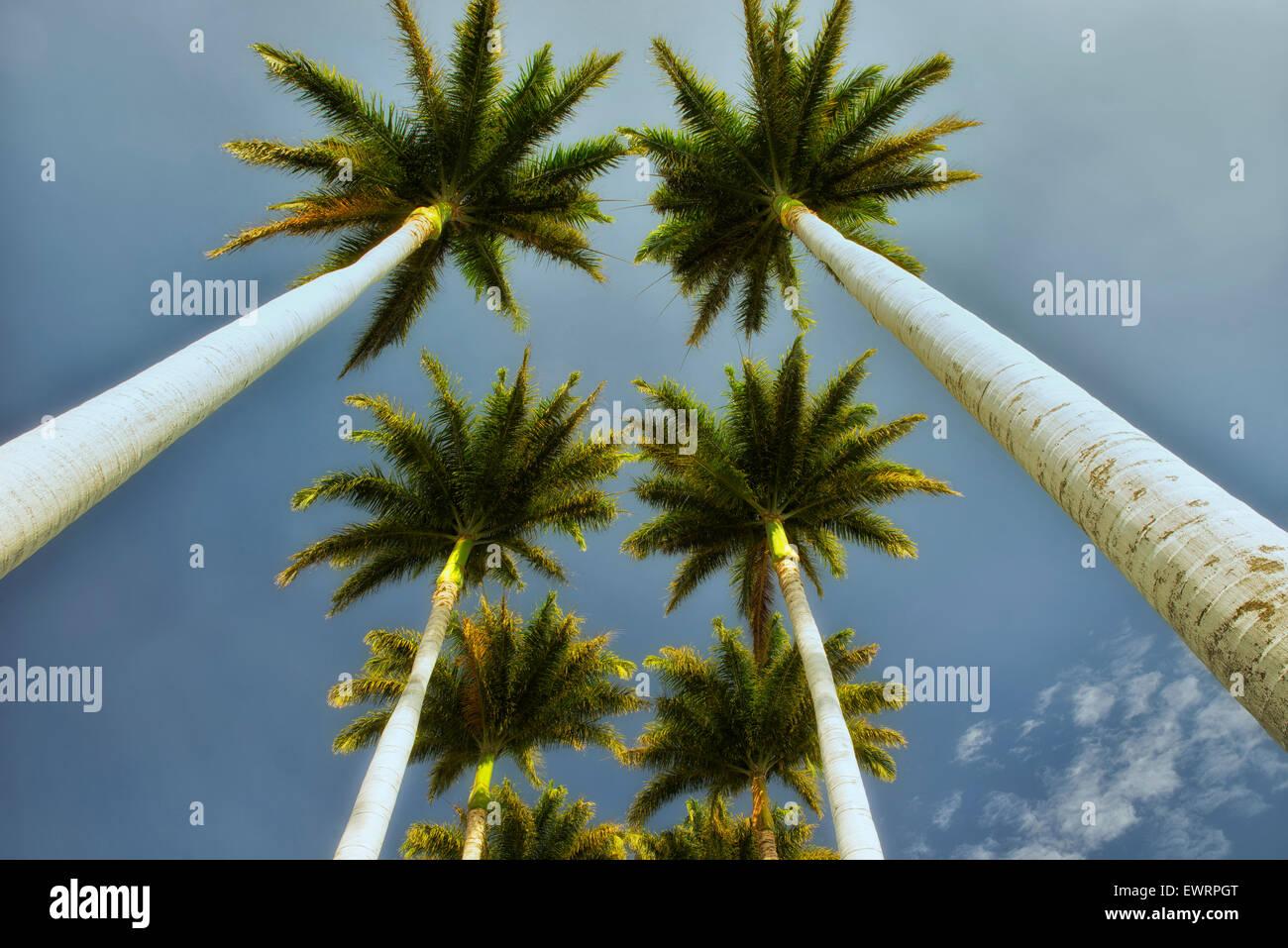 Grâce à la recherche de palmiers. New York, la Grande Île Photo Stock