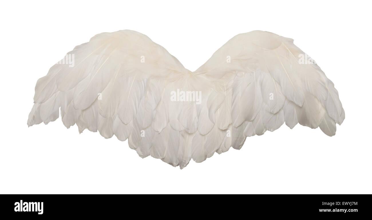 Les ailes des oiseaux se déploient en isolé sur fond blanc. Photo Stock