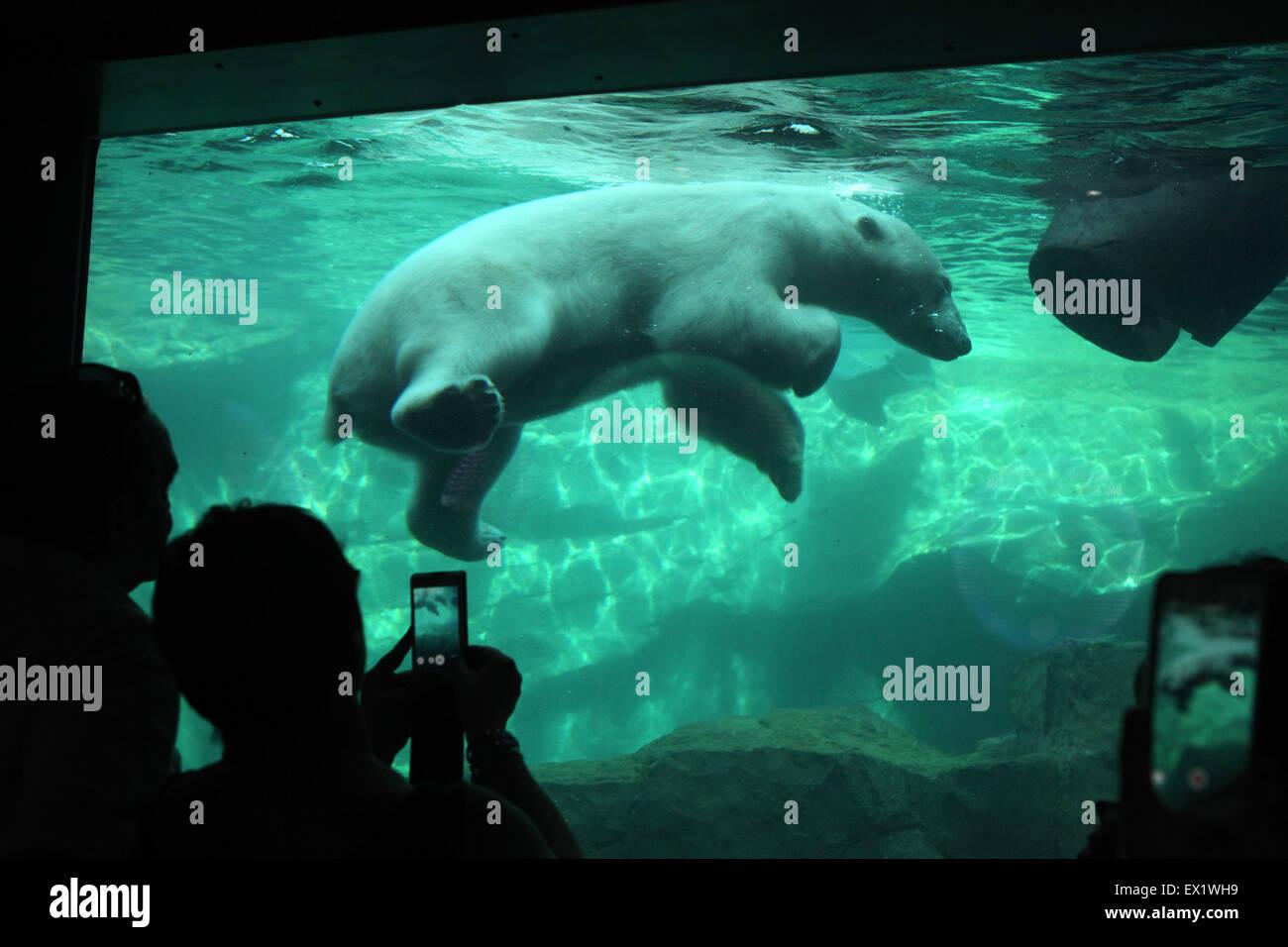 Les visiteurs regarder comme un ours polaire (Ursus maritimus) nager sous l'eau au Zoo de Schönbrunn à Photo Stock