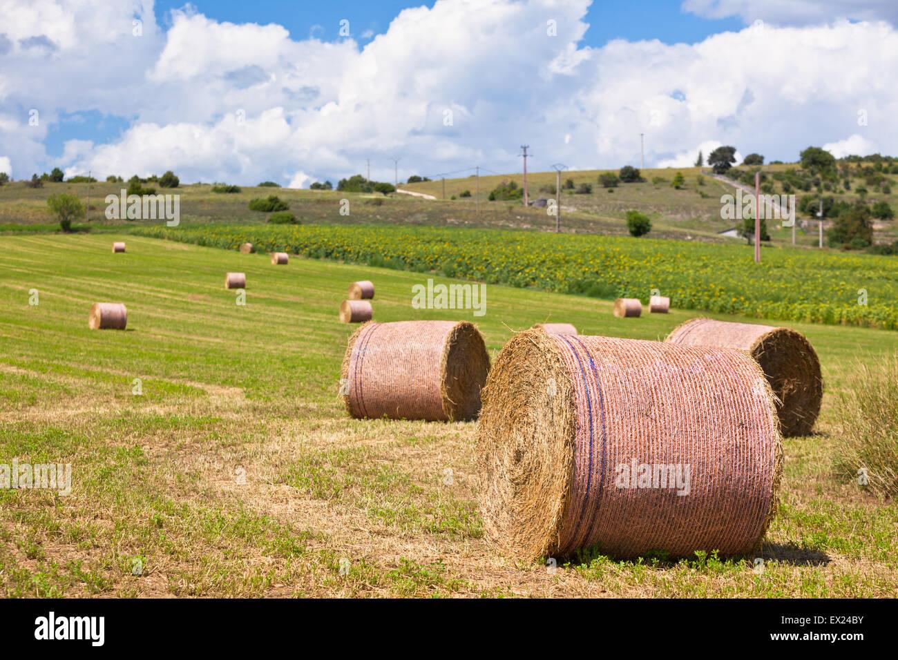Paysage rural avec les terres agricoles et les bottes de paille en Provence, France Photo Stock