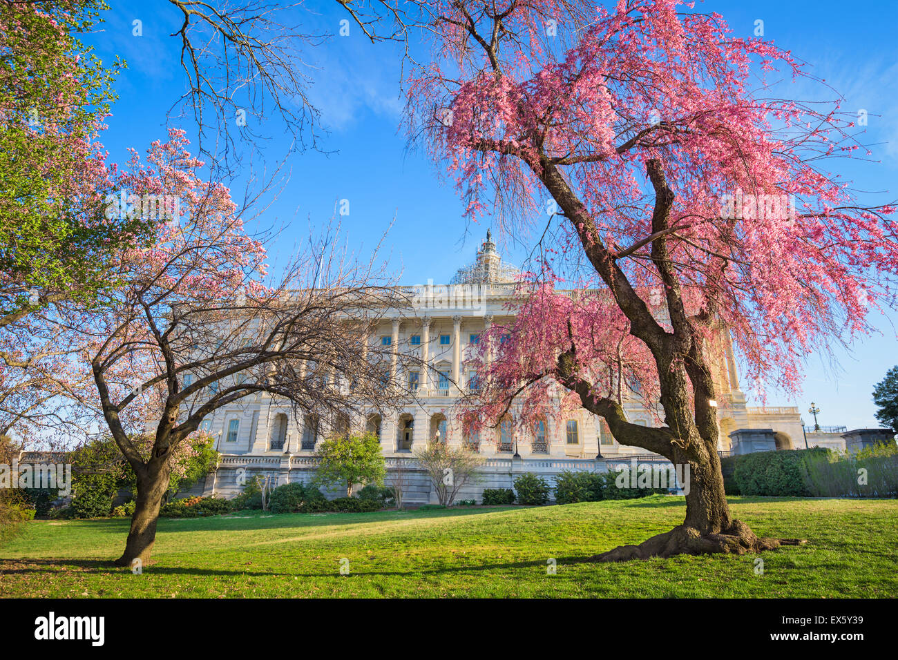 Washington DC Capitol à l'immeuble pendant la saison du printemps. Photo Stock