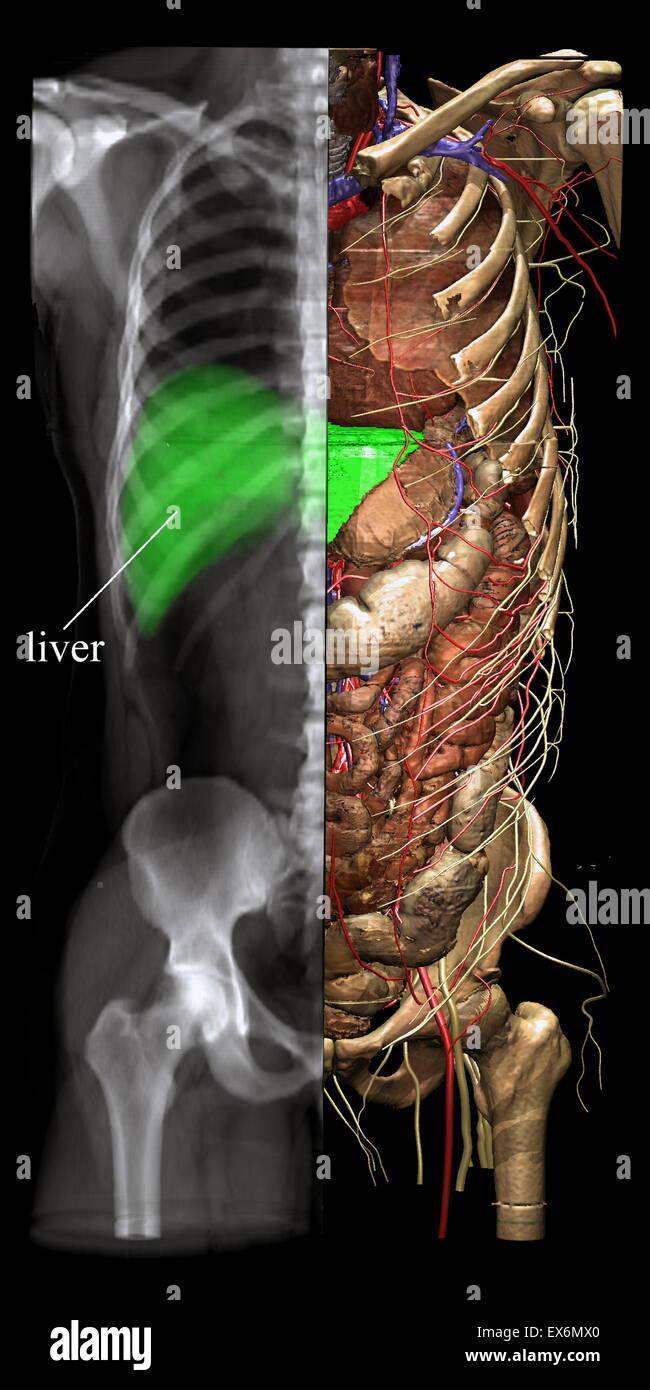 Différents modes de visualisation telles que l'imagerie à rayons X peut être choisi à partir Photo Stock