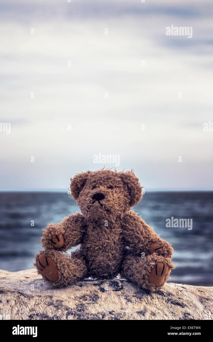 Un ours est assis sur une pierre à la mer Photo Stock