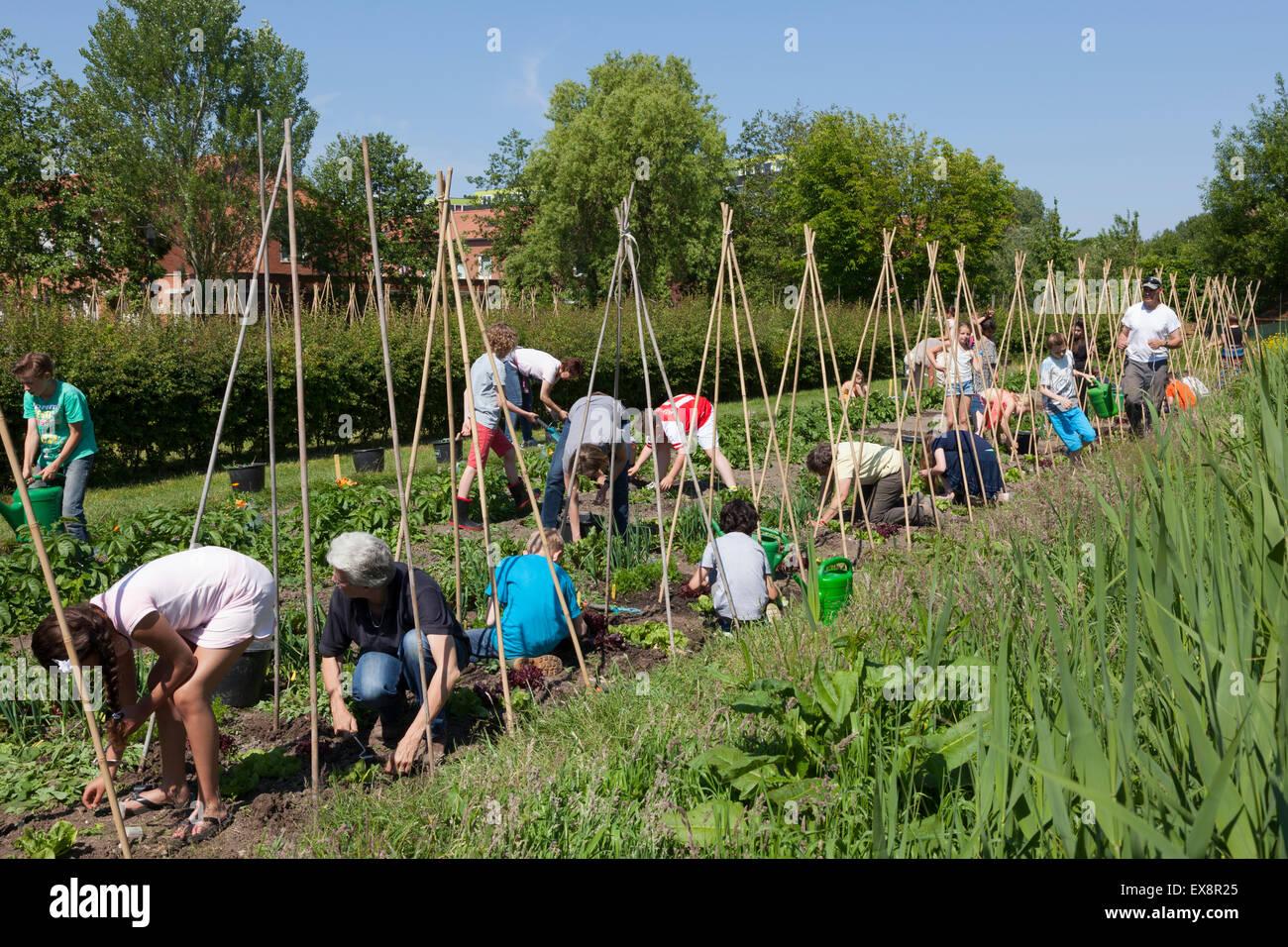 Les enfants qui travaillent dans leur jardin de l'école pour apprendre à cultiver des légumes Photo Stock