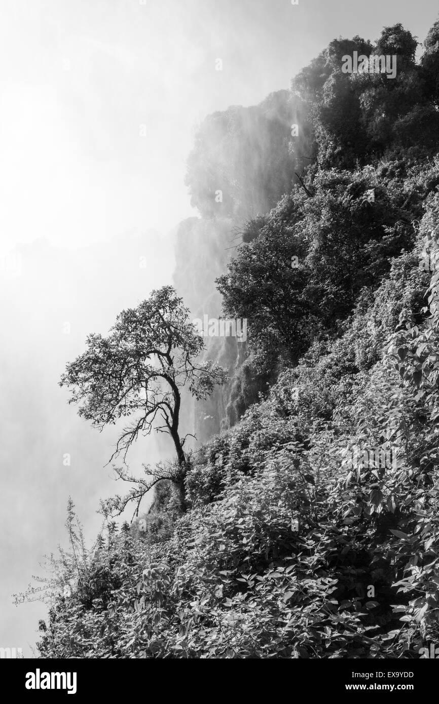 L'Afrique, Zimbabwe, Victoria Falls National Park, le brouillard couvre de plus en plus de forêt sur des Photo Stock