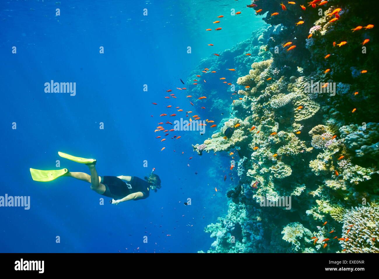 Mer Rouge, Egypte - femme en apnée sous l'eau, les récifs coralliens, Trou Bleu près de Dahab Photo Stock