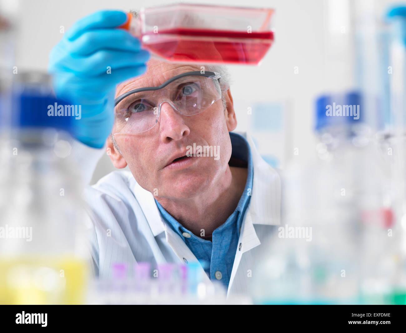 Close up de biologiste cellulaire tenant un ballon contenant des cellules souches Photo Stock